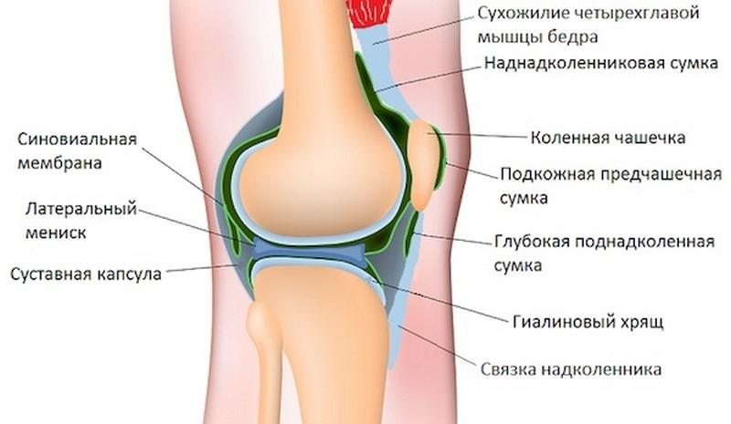картинки складок колена тщательно вымыть мелко